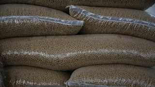 Report: China to buy more US soybeans as of today