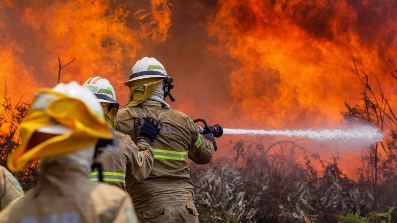At least 62 die in forest fire in Portugal