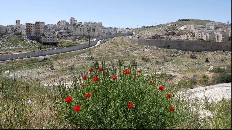 Irish upper house votes to boycott Israeli settlements